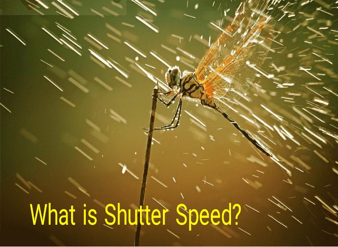 Shutter speed in macro